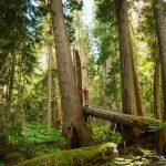 Flora, Plan A saving forest 1