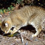 Feral animals, cats 1