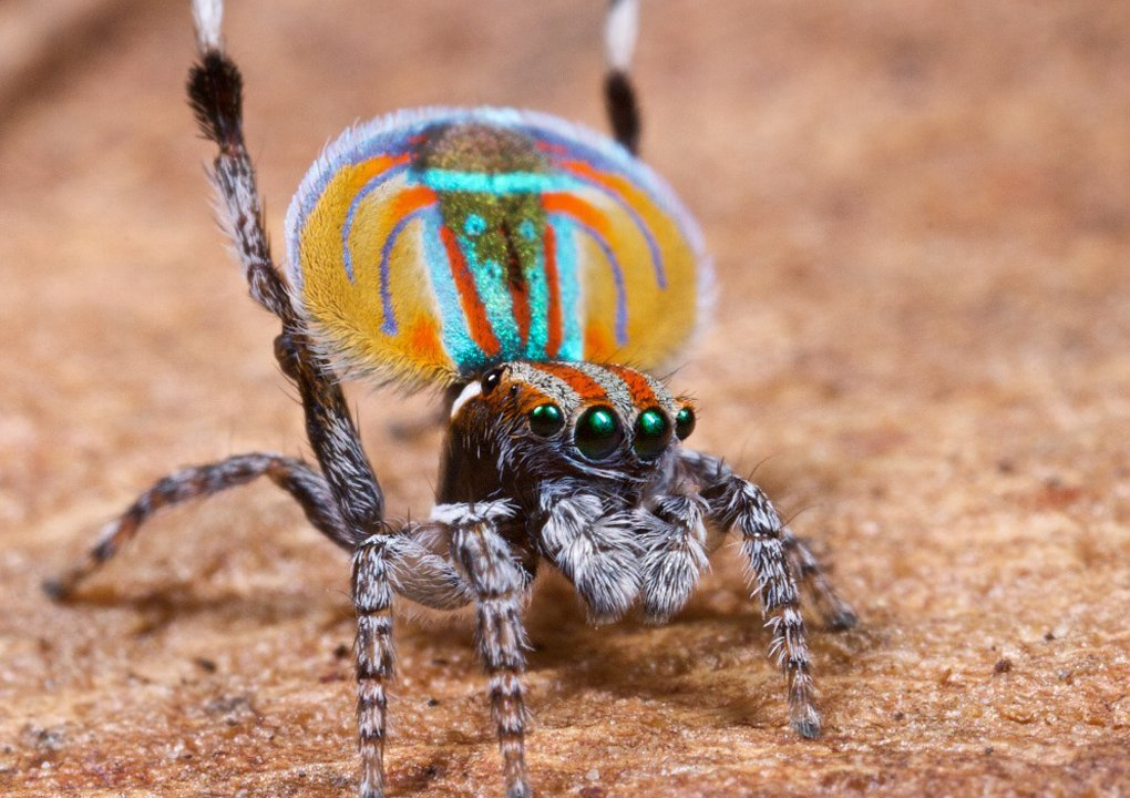 You are currently viewing Incy-wincy spiders are waiting to be discovered
