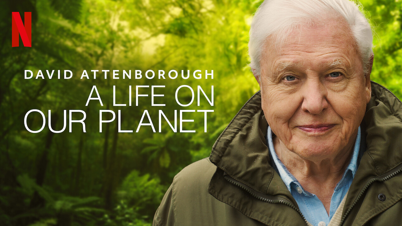 Read more about the article Experience and gratitude. A call for action, from David Attenborough