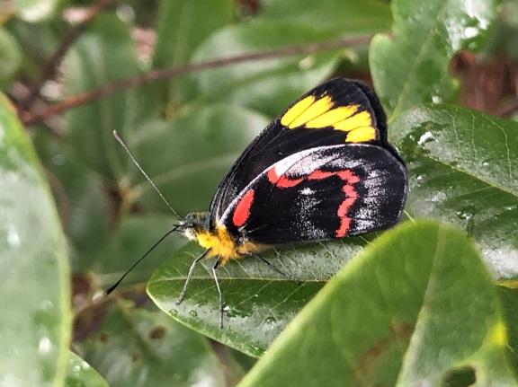 Read more about the article Misunderstood mistletoe is a keystone species